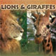 PBS-lions and giraffes
