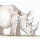 save the rhino programme