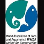 waza copy