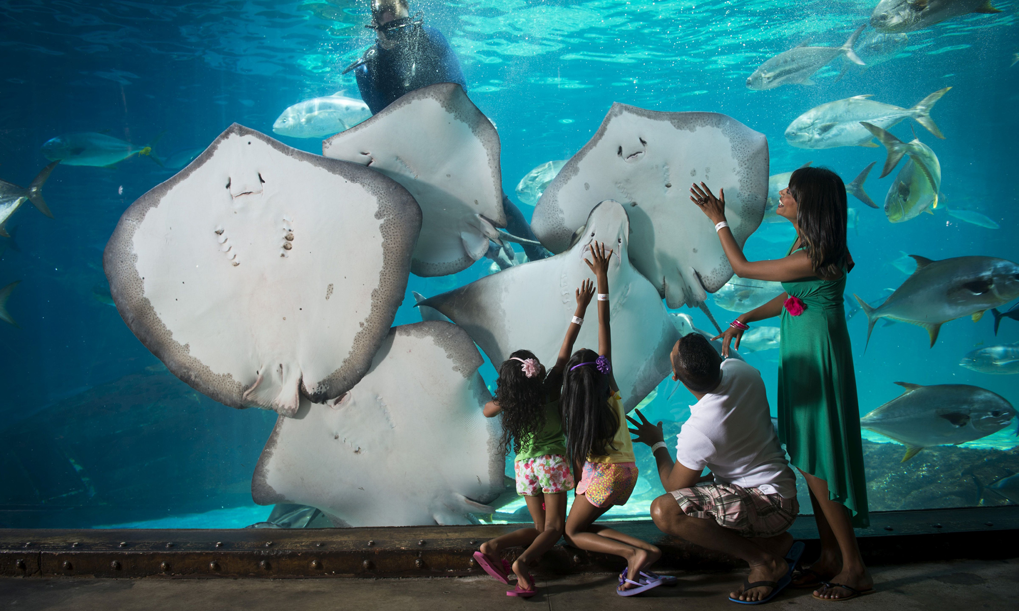 International Zoo Educators Association